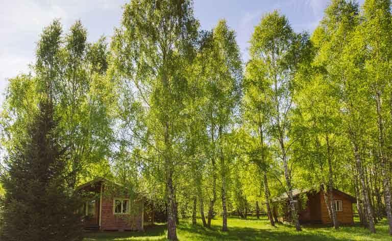 Im Birkenhain - Ferienhaus am See in Polen fuer den Urlaub mit der Familie